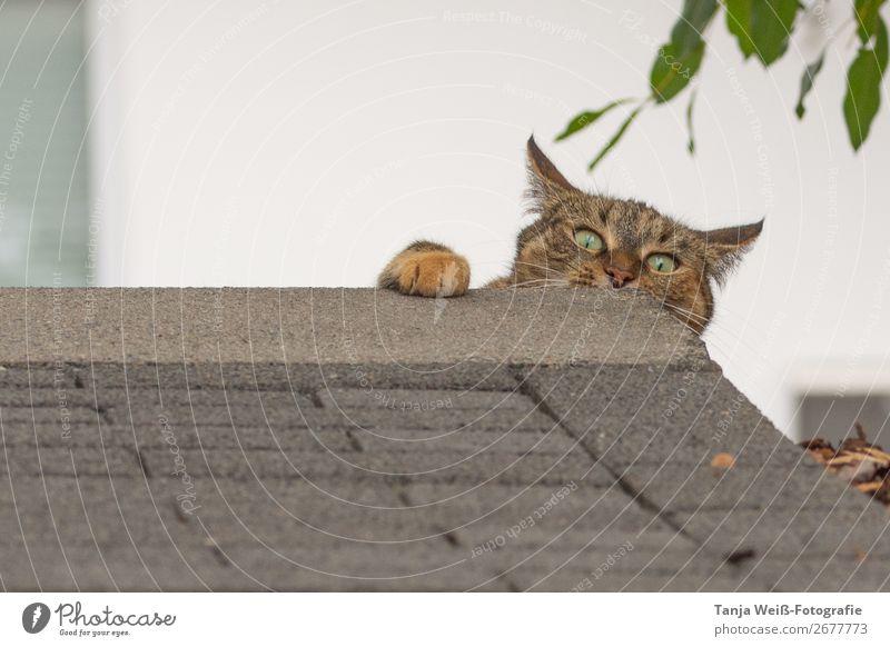 Cat Animal Joy Crazy Pet Surprise Whimsical Brash
