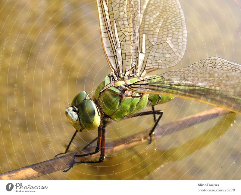 Nature Water Green Lake Fly River Wing Insect Macro (Extreme close-up) Pond Exotic Focal point Dragonfly Glimmer Fascinating