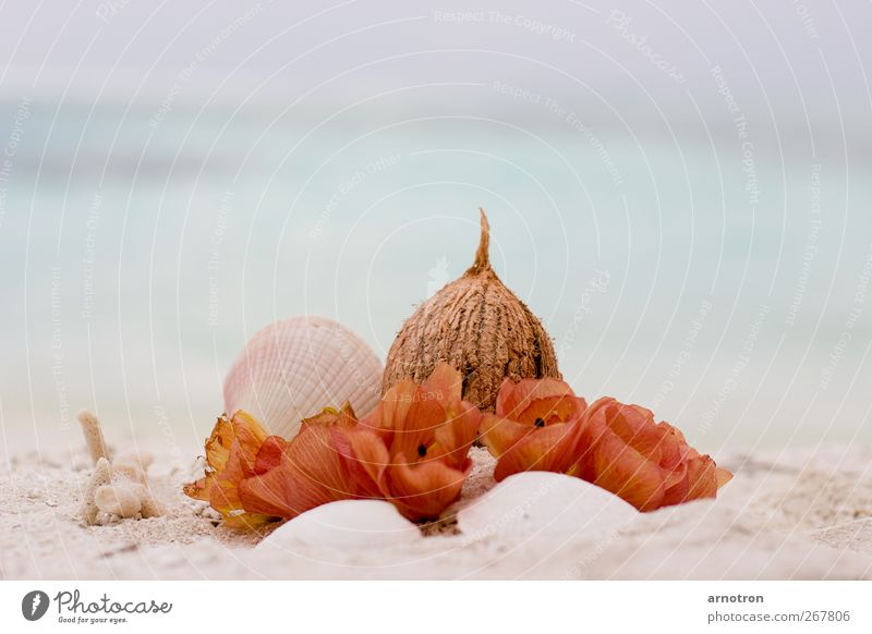 coconut wedding Coconut Exotic Wellness Harmonious Calm Vacation & Travel Summer vacation Ocean Beautiful weather Blossom Hibiscus tiliaceus