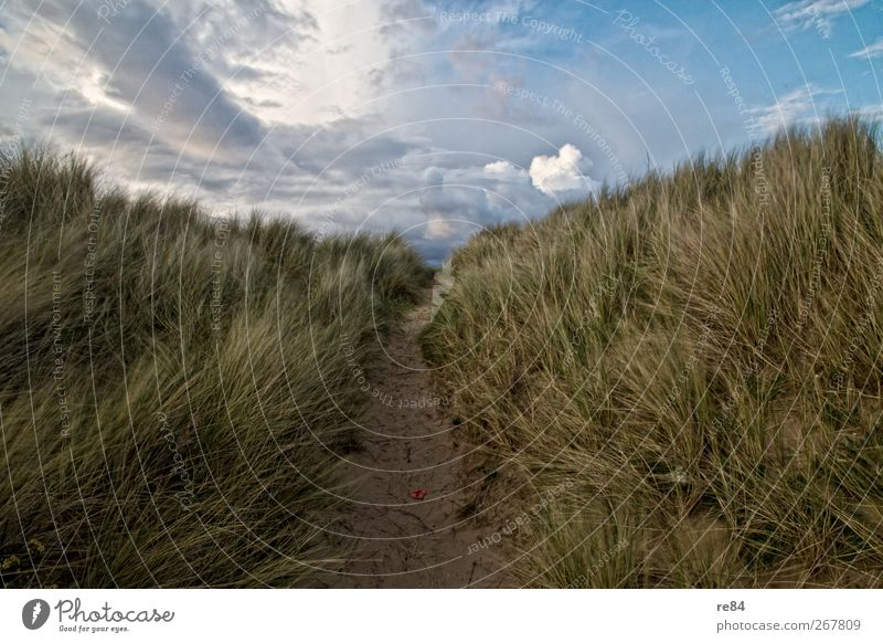 Nature Summer Beach Clouds Calm Relaxation Environment Landscape Movement Coast Grass Sand Horizon Climate Beautiful weather North Sea