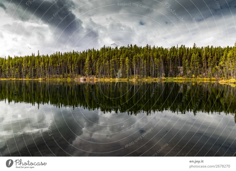 centred Vacation & Travel Trip Nature Landscape Plant Sky Clouds Storm clouds Autumn Forest Lakeside Climate Surrealism Symmetry Grief Dream Sadness Irritation