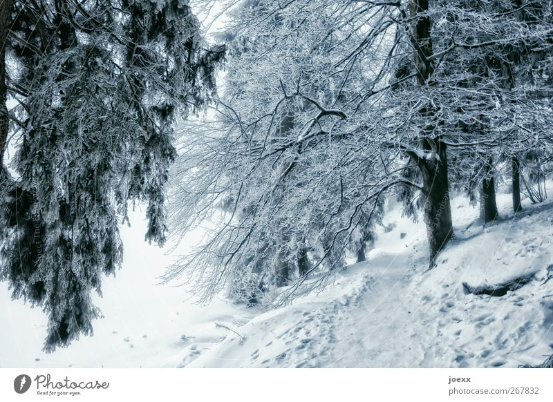 Bye. Bye. Nature Winter Ice Frost Snow Forest Lanes & trails Cold Blue Gray Black White Calm Mummelsee Lake Colour photo Exterior shot Deserted Day