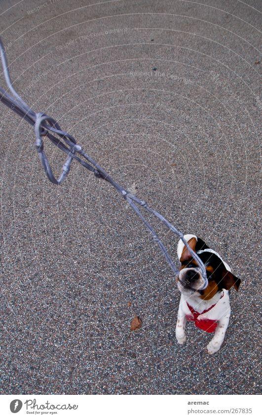 Dog Animal Life Playing Pet Fight