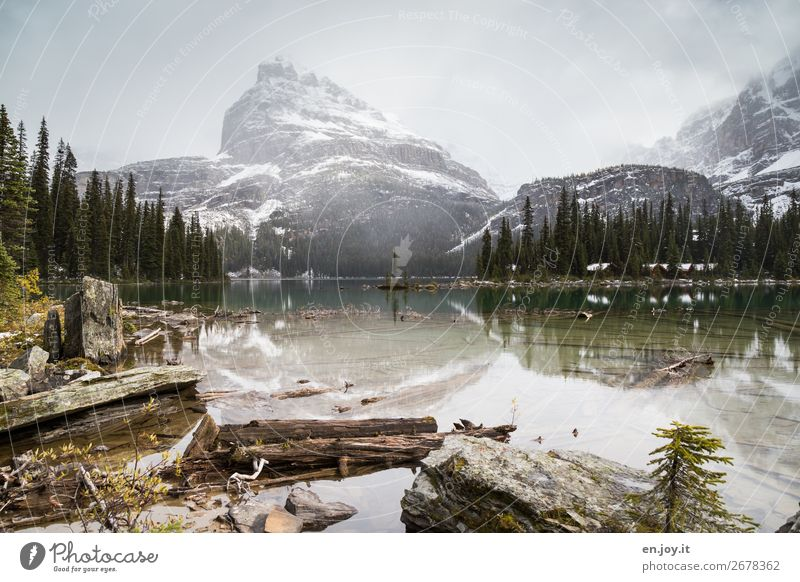 Lake O'Hara Vacation & Travel Tourism Trip Adventure Far-off places Freedom Expedition Winter Mountain Environment Nature Landscape Clouds Forest Rock Lakeside