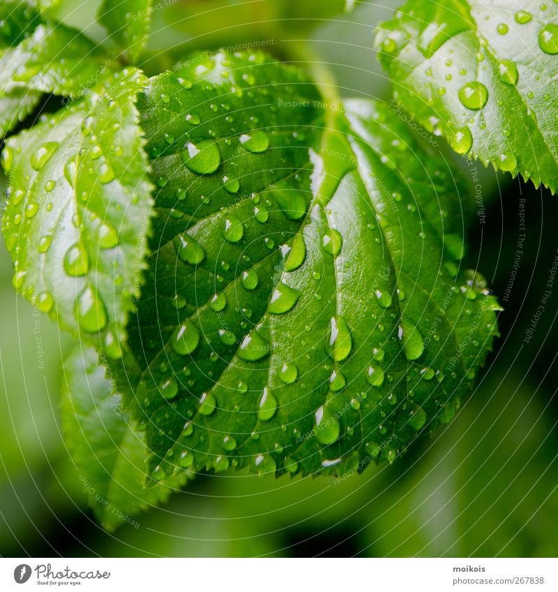 Nature Plant Water Relaxation Leaf Calm Life Spring Garden Art Energy industry Rain Hiking Creativity Drops of water Wellness