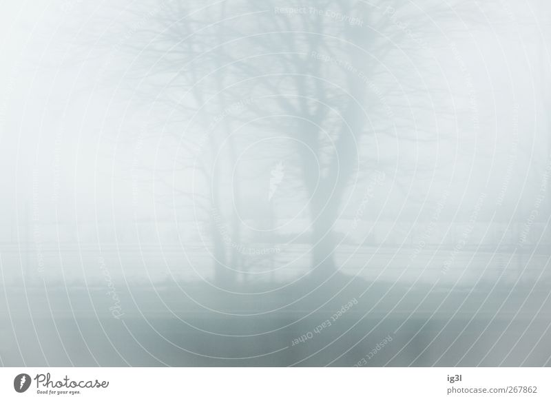horizon Landscape Field Bright White Moody Calm Authentic Winter Colour photo Exterior shot Deserted Shroud of fog Misty atmosphere Blur Copy Space
