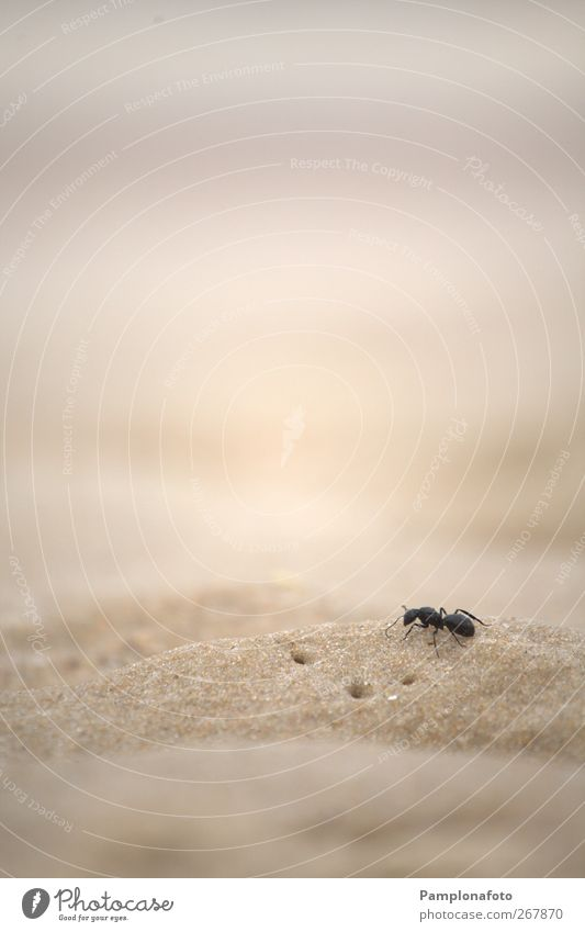 Ant on sand Nature Ocean Beach Animal Loneliness Freedom Sand Earth Power Success Might Cute Uniqueness Willpower Self-confident Survive