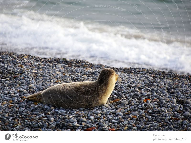 I see him... Environment Nature Animal Elements Earth Water Winter Weather Beautiful weather Waves Coast Beach North Sea Ocean Island Wild animal Pelt 1 Free