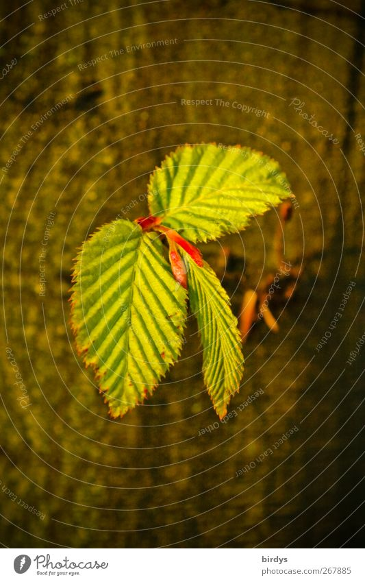 Nature Green Tree Leaf Life Warmth Spring Brown Natural Fresh Esthetic Growth Illuminate Change Delicate Leaf bud