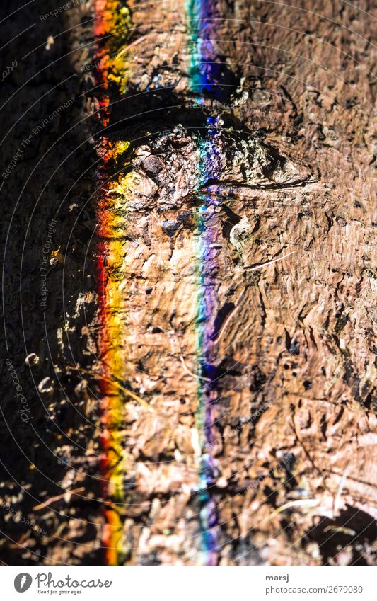 But it was funny! Trash! 2018 Harmonious Tree bark Tree trunk Refraction Exceptional Creepy Trashy Strange Futile Prismatic colors Striped Lighting Colour photo