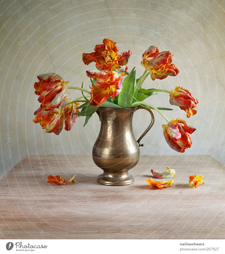 Still Life with Tulips Art Nature Plant Spring Flower Blossom Bouquet Vase Wood Metal Esthetic Brown Green Red Time Limp Faded Colour photo Multicoloured