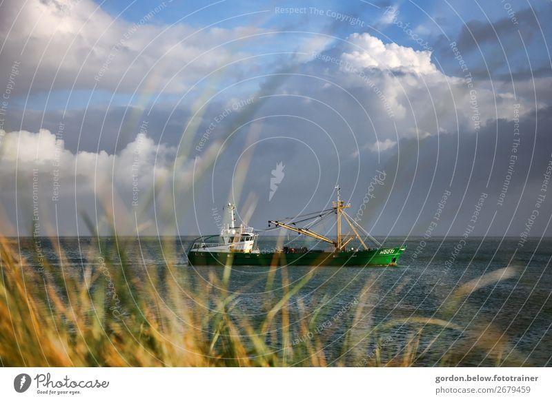 voyage of discovery Happy Leisure and hobbies Vacation & Travel Trip Adventure Far-off places Nature Plant Water Sky Clouds Summer Grass North Sea Navigation