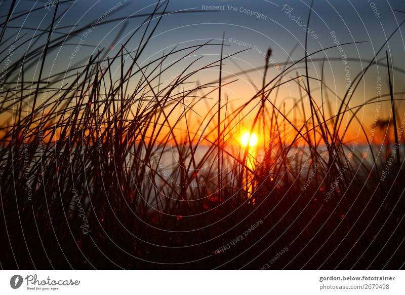 Sunset Leisure and hobbies Vacation & Travel Trip Adventure Far-off places Beach Ocean Nature Landscape Plant Water Sky Cloudless sky Beautiful weather Grass