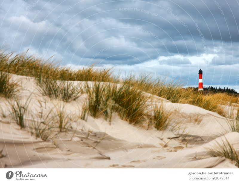 summer dreams Vacation & Travel Adventure Far-off places Summer Summer vacation Nature Plant Sky Clouds Wind Tree Grass Beach North Sea Deserted Lighthouse Sand