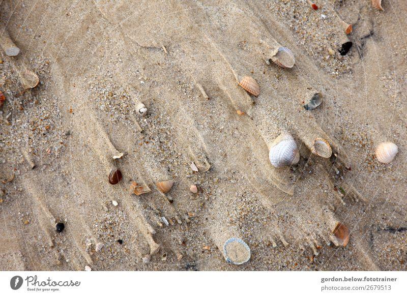 sand stories Happy Leisure and hobbies Vacation & Travel Trip Adventure Summer Nature Plant Earth Sand Beach Stone Movement Blue Brown Orange Black White Joy