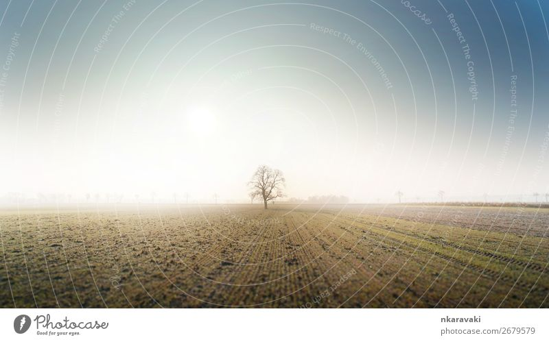 Tree in an Autumn Morning Fog Landscape Earth Cloudless sky Field Willpower Loneliness Colour photo Exterior shot Deserted Sunlight Wide angle