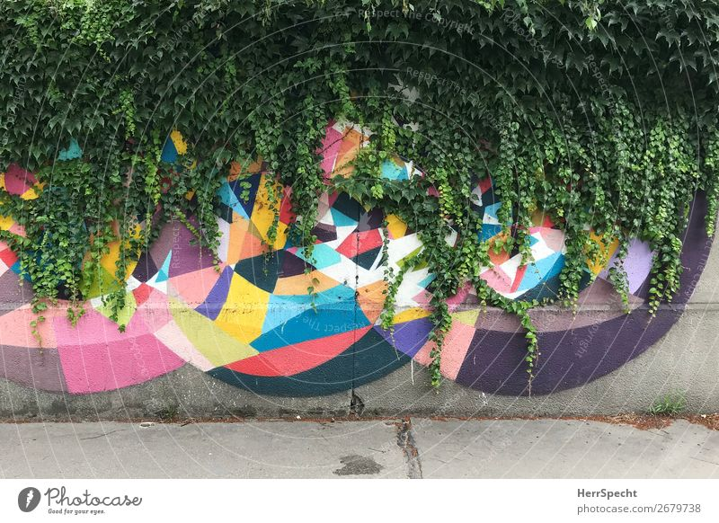 Nature vs Art Work of art Wall (barrier) Wall (building) Concrete Graffiti Exceptional Hip & trendy Natural Town Multicoloured Green Growth Cover up Ivy Creeper