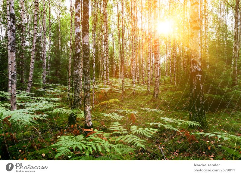birch forest in spring Trip Summer Hiking Nature Landscape Plant Spring Beautiful weather Tree Grass Bushes Moss Park Forest Natural Idyll Moody Birch wood