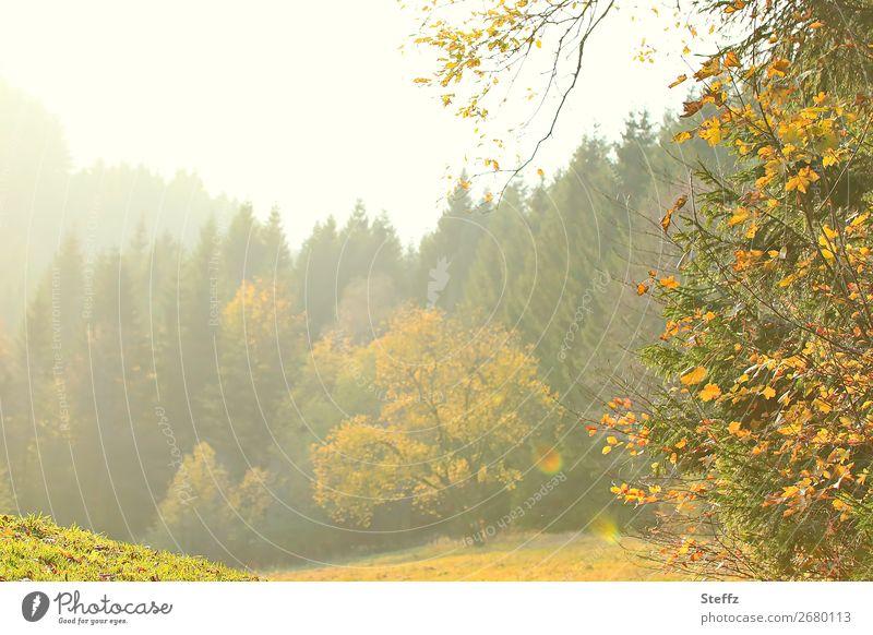 light nuances Autumn Romance autumn impression Tree shimmer of light beautiful autumn day Picturesque Poetic warm autumn day autumn picture lovely autumn light