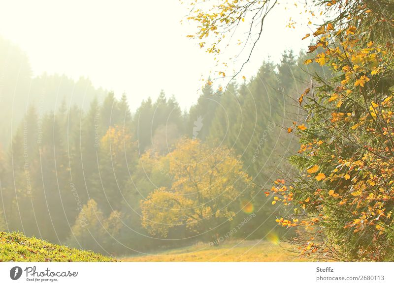 light nuances Environment Nature Landscape Plant Autumn Beautiful weather Tree Autumn leaves Meadow Forest Edge of the forest Yellow Green Moody Romance