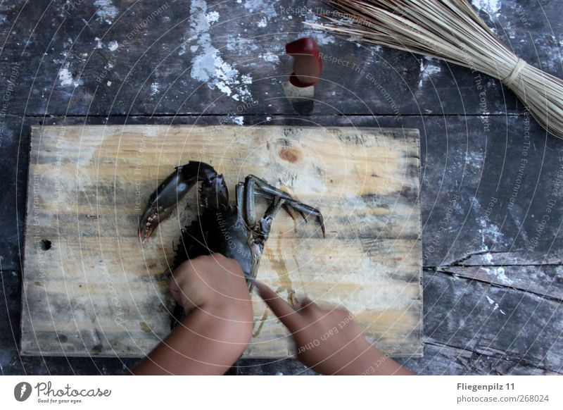 Hand Animal Dark Death Cold Movement Power Food Dirty Table Point Appetite Knives Sharp-edged Disgust Chopping board