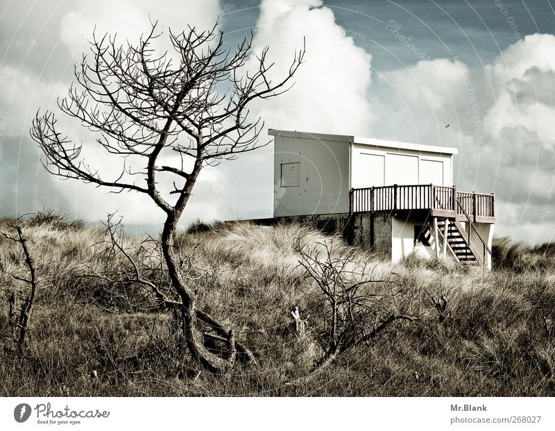 bathhouse sangatte Small Town Deserted Terrace Relaxation Loneliness Marram grass Dune Hut Tree Colour photo Exterior shot Day