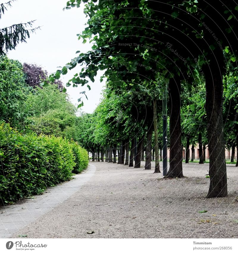 Karlsruhe: Karl is gone! City trip Tree Bushes Park Lanes & trails Sand Wood Going Looking Juicy Gray Green Arrangement Calm Avenue Colour photo Subdued colour