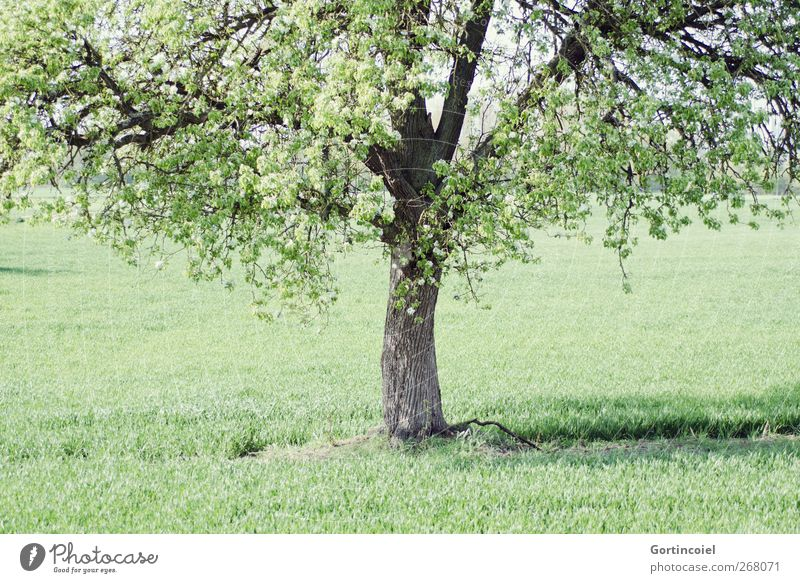 Nature Green Tree Plant Environment Spring Grass Blossom Field Natural Beautiful weather Tree trunk Treetop Rural Country life Leaf canopy