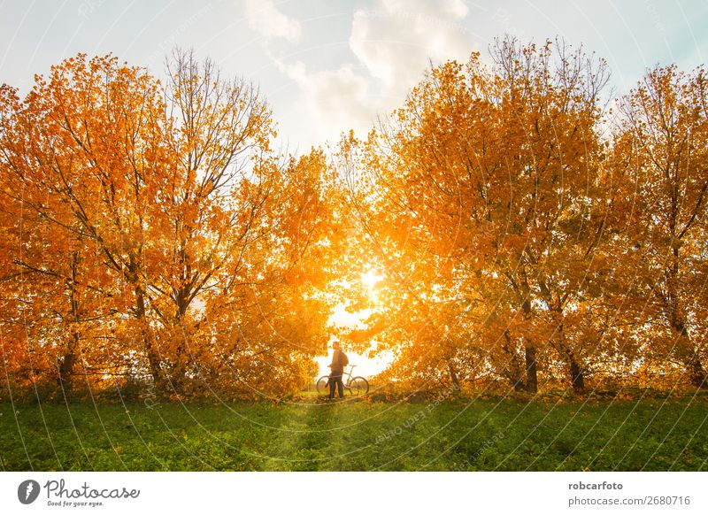 man with bike with trees in autumn Lifestyle Joy Adventure Mountain Sports Cycling Man Adults Nature Landscape Autumn Tree Forest Street Lanes & trails Fitness