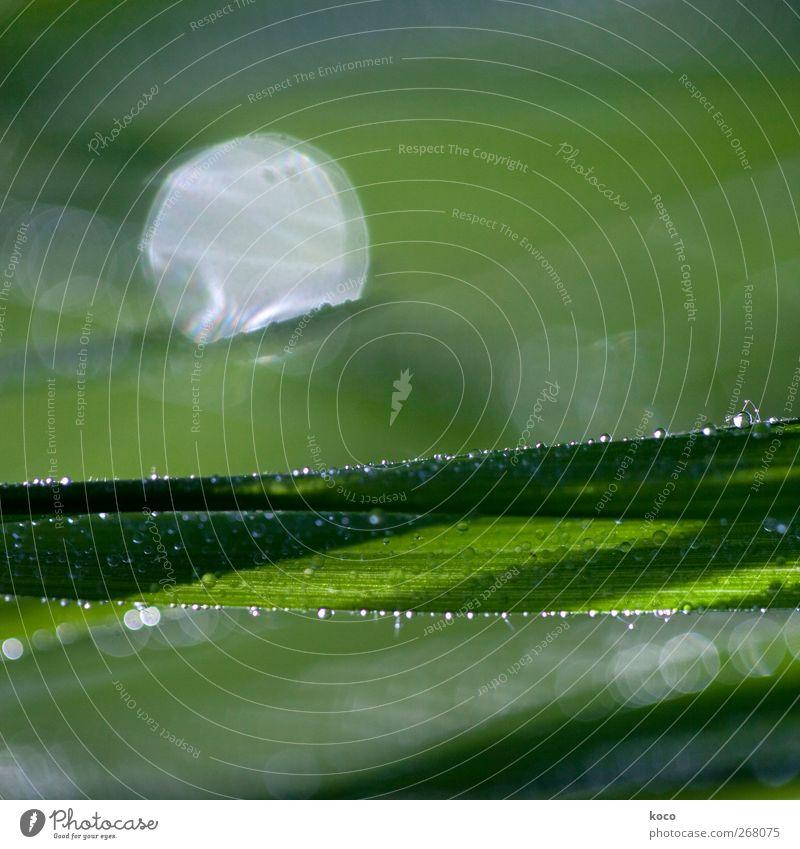 Nature White Green Beautiful Plant Sun Summer Leaf Black Spring Grass Dream Line Glittering Fresh Drops of water