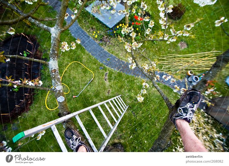 cherry Leisure and hobbies Adventure Garden Man Adults Feet 1 Human being Nature Plant Spring Climate Flower Blossom Meadow Growth Joy Spring fever Enthusiasm