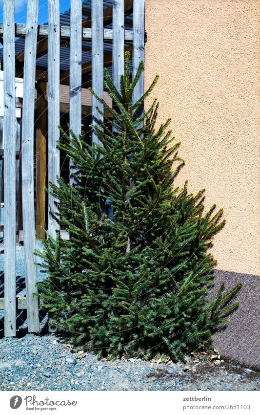 Christmas tree Fir tree Spruce Coniferous trees Christmas & Advent Preparation Feasts & Celebrations Decoration Religion and faith Tradition Stand Corner Fence