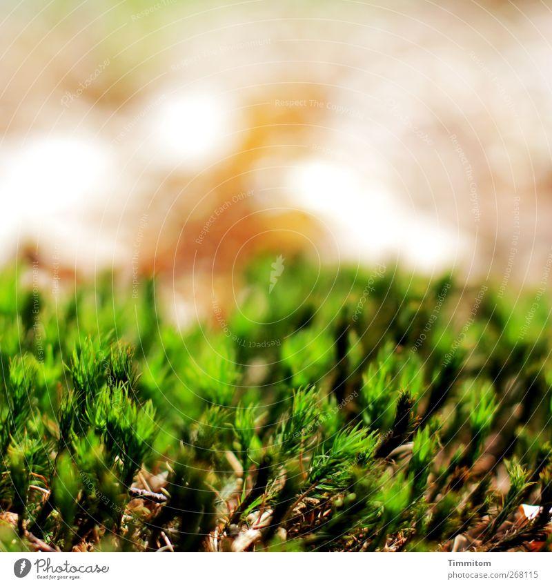 Nature Green Plant Environment Natural Esthetic Moss Woodground