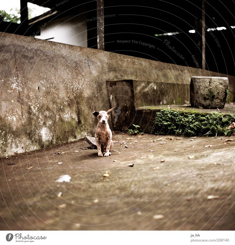 Dog Loneliness Small Cute Longing Appetite Pet Thirst Survive Responsibility Love of animals Puppy Compassion Outsider Bali Indonesia