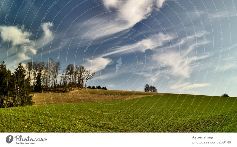 shreds of clouds Environment Nature Landscape Plant Earth Air Sky Clouds Spring Weather Beautiful weather Warmth Tree Grass Bushes Leaf Foliage plant Meadow