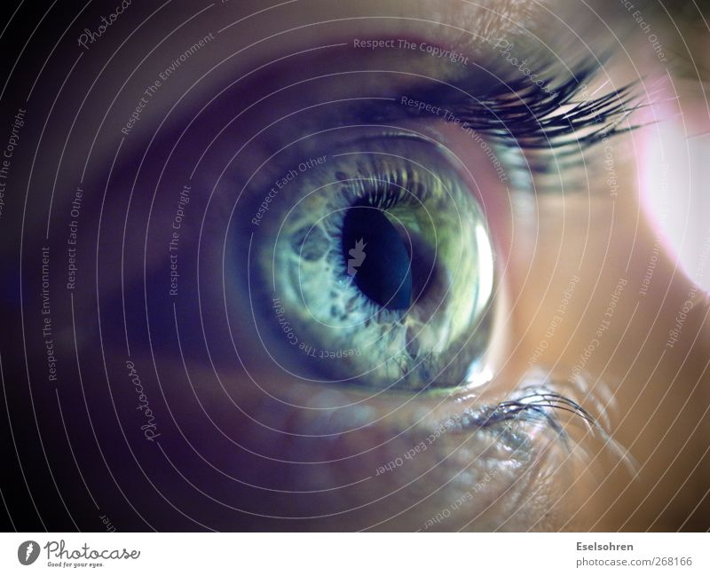 .... Feminine Woman Adults Face Eyes 1 Human being Observe Looking Cold Natural Curiosity Blue Gray Calm Eyelash Iris Colour photo Interior shot Close-up Detail