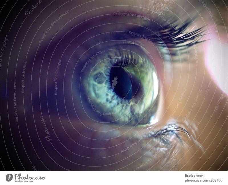 Human being Woman Blue Calm Face Adults Eyes Cold Feminine Gray Natural Observe Curiosity Eyelash Iris