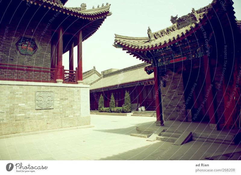 silent Bushes Ivy Park Xian China Old town Deserted House (Residential Structure) Places Architecture Temple Facade Roof Authentic Sharp-edged Town Historic
