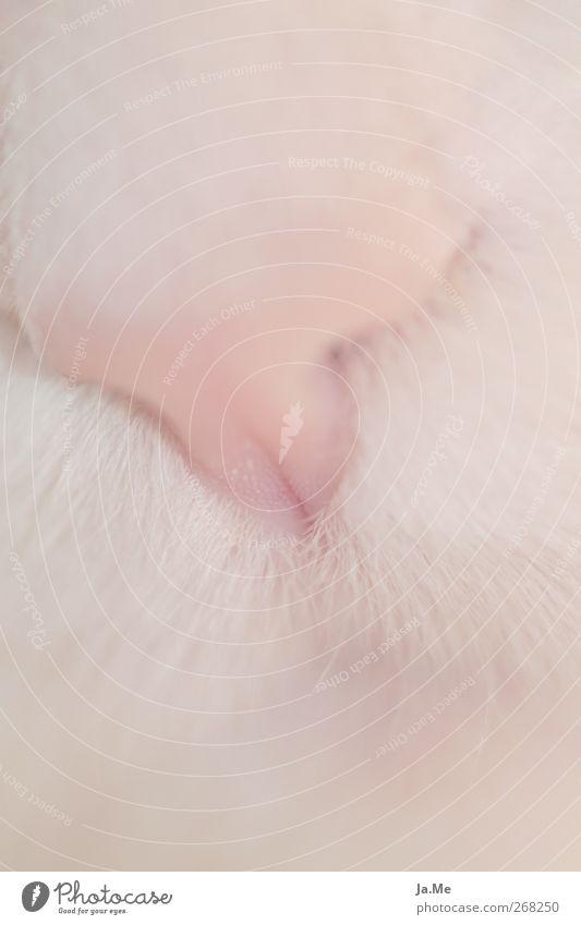 Cat Animal Pink Soft Pelt Animal face Pet Cat's head