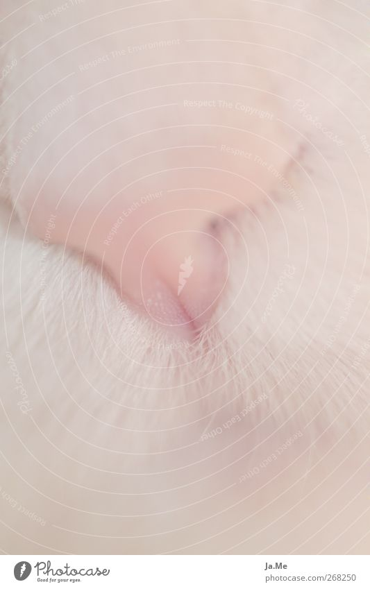 soft and cuddly Pet Cat Animal face Pelt Cat's head 1 Soft Pink Subdued colour Macro (Extreme close-up) Shallow depth of field