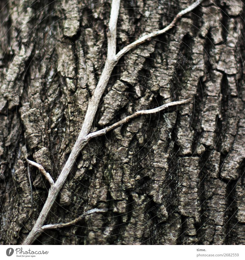 I'm gonna be stuck alive with all this aging. Tree Ivy Wild plant Tree trunk Tree bark Furrow Forest Growth Old Esthetic Natural Curiosity Friendship Together