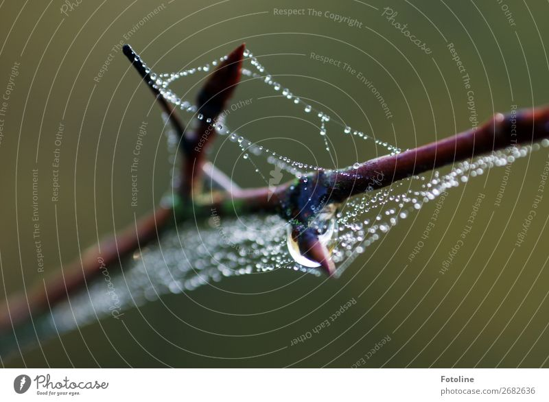 drips Environment Nature Plant Elements Water Drops of water Autumn Wild plant Fluid Near Wet Natural Beautiful Brown Green Branch Spider's web Cobwebby Dew