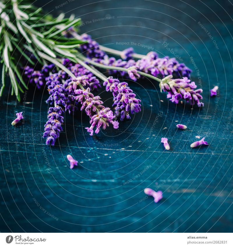 Lavender on rustic background Nature Plant Summer Flower Blue Green Violet Fragrance ethereal Aromatic Comforting Rustic blossom Rosemary herbs Colour photo