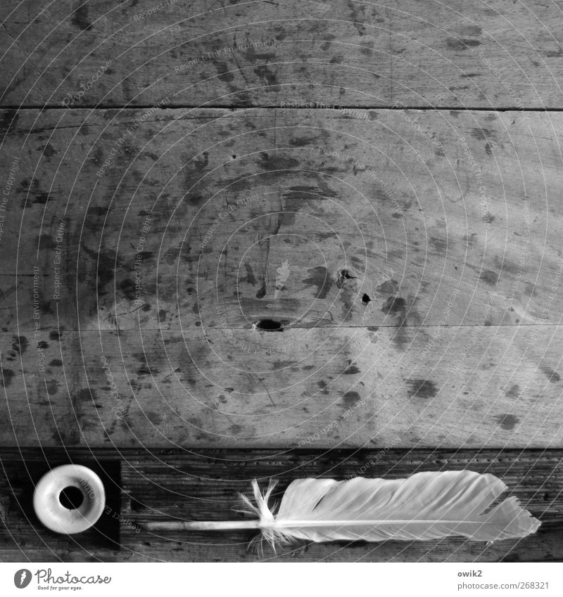 typewriter Feather Quill School bench Wood Lie Wait Old Simple Historic Point Gray Black White Conscientiously Caution Serene Patient Calm Self Control