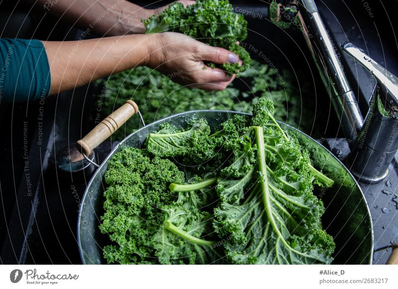 Wash green cabbage Food Vegetable Lettuce Salad Cabbage Kale Kale leaf Nutrition Organic produce Vegetarian diet Diet Fasting Bowl Lifestyle Healthy Eating