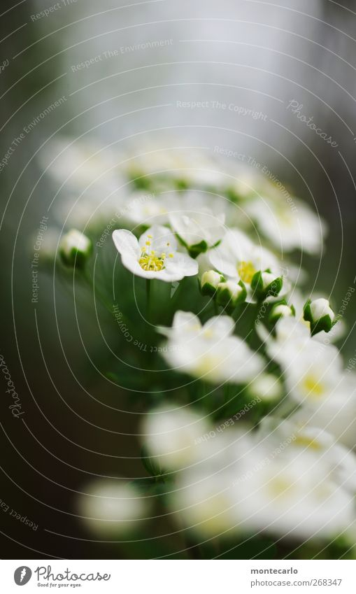 Nature White Green Beautiful Plant Flower Leaf Environment Spring Small Blossom Park Wind Elegant Natural Fresh
