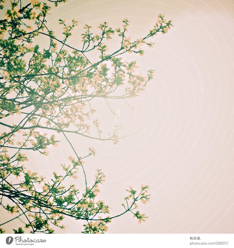Nature Tree Plant Spring Leisure and hobbies Growth Retro Beautiful weather Joie de vivre (Vitality)