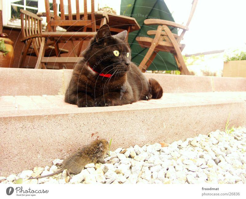 Death Cat Chair Blood Mouse Domestic cat Pebble Assassin