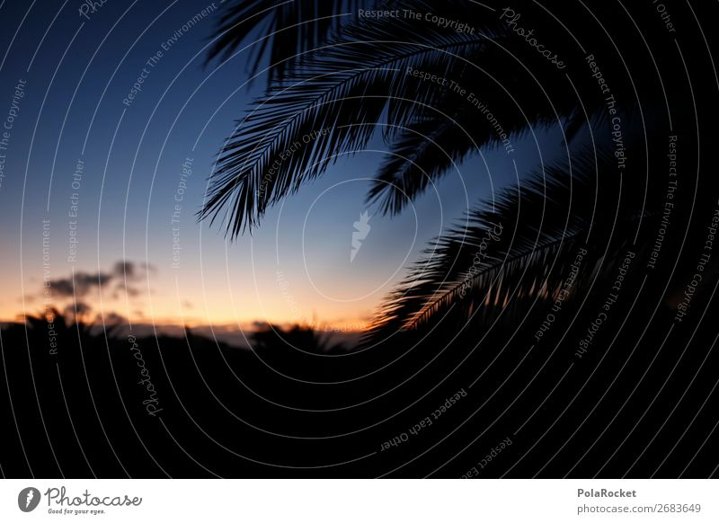 #AS# palm dreams Nature Happiness Palm tree Palm frond Evening Evening sun Dusk Vacation & Travel Part of the plant Plant Southern To enjoy Sunset Freedom Dream