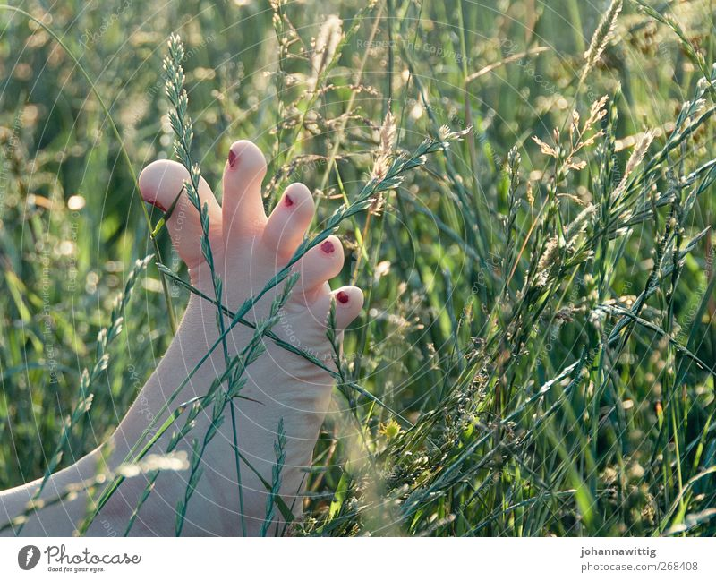 Feet. Woman Adults 1 Human being 18 - 30 years Youth (Young adults) Nature Summer Grass Bushes Garden Park Meadow Field Exceptional Green Red Emotions Joy